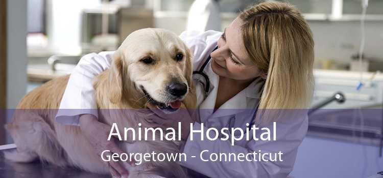 Animal Hospital Georgetown - Connecticut