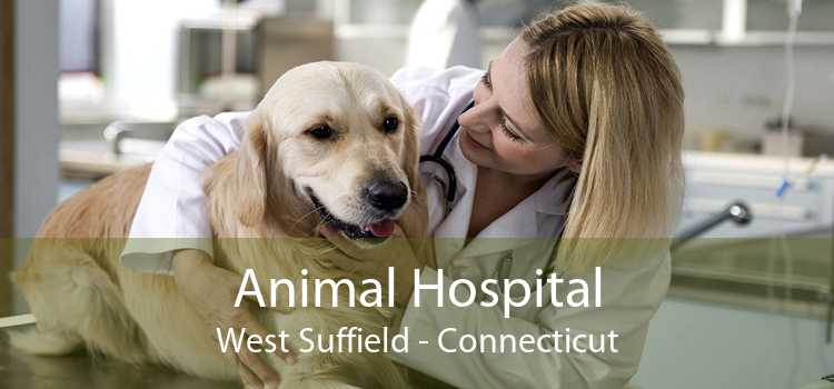 Animal Hospital West Suffield - Connecticut