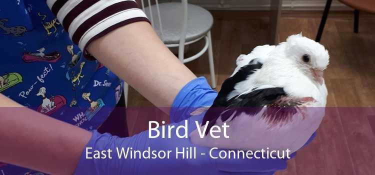 Bird Vet East Windsor Hill - Connecticut