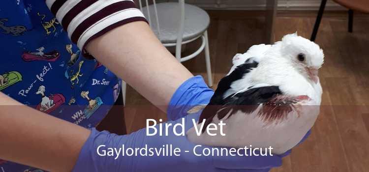 Bird Vet Gaylordsville - Connecticut