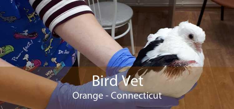 Bird Vet Orange - Connecticut
