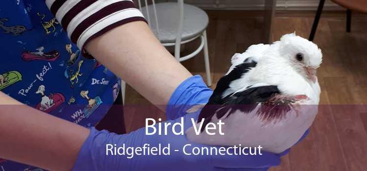 Bird Vet Ridgefield - Connecticut