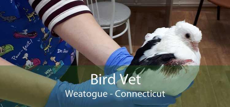 Bird Vet Weatogue - Connecticut