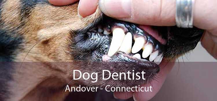 Dog Dentist Andover - Connecticut