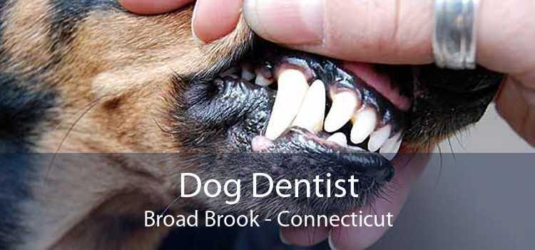Dog Dentist Broad Brook - Connecticut