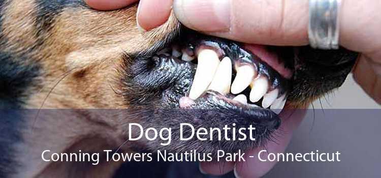 Dog Dentist Conning Towers Nautilus Park - Connecticut