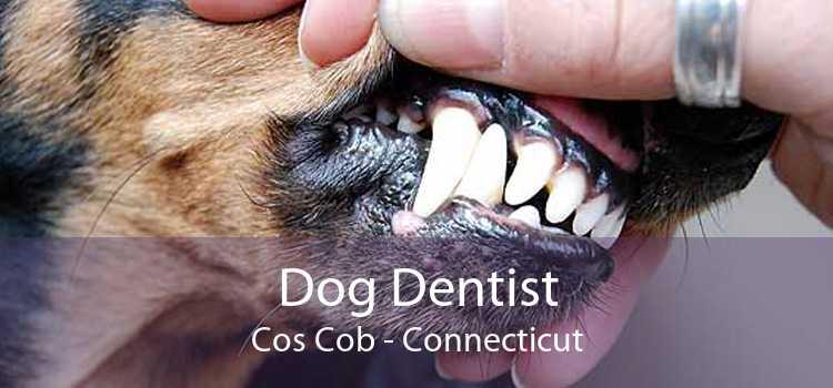Dog Dentist Cos Cob - Connecticut