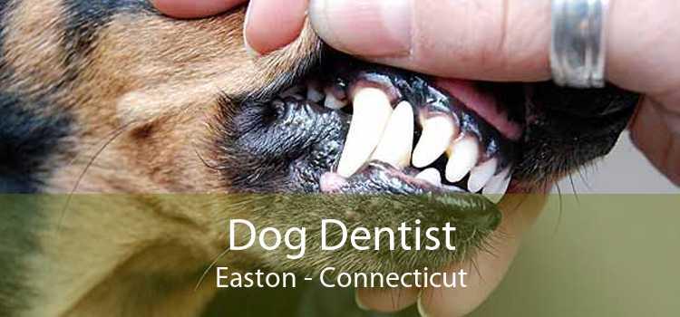 Dog Dentist Easton - Connecticut