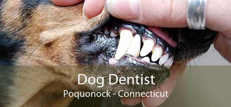 Dog Dentist Poquonock - Connecticut