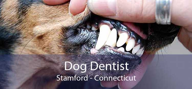 Dog Dentist Stamford - Connecticut