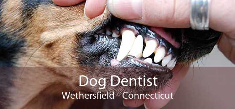 Dog Dentist Wethersfield - Connecticut