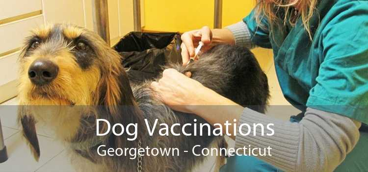 Dog Vaccinations Georgetown - Connecticut