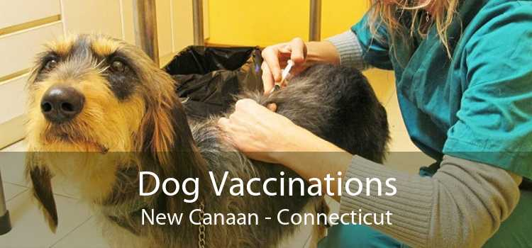 Dog Vaccinations New Canaan - Connecticut