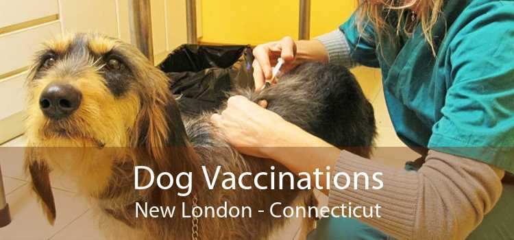 Dog Vaccinations New London - Connecticut