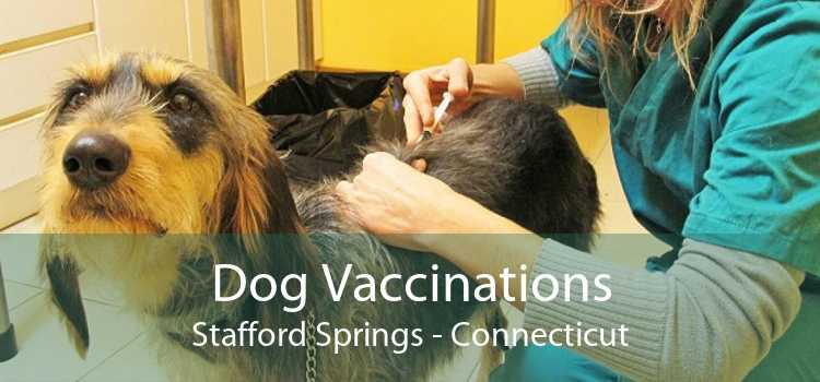Dog Vaccinations Stafford Springs - Connecticut