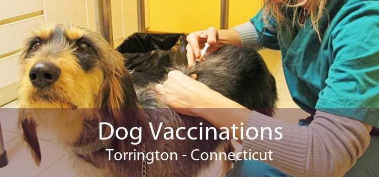 Dog Vaccinations Torrington - Connecticut