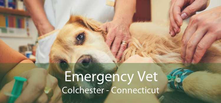 Emergency Vet Colchester - Connecticut