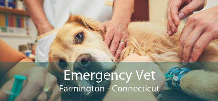 Emergency Vet Farmington - Connecticut