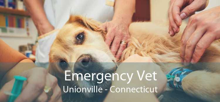 Emergency Vet Unionville - Connecticut