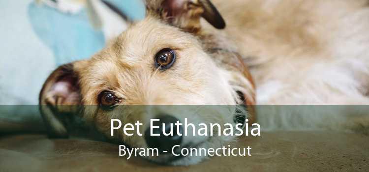 Pet Euthanasia Byram - Connecticut