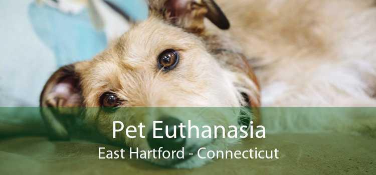 Pet Euthanasia East Hartford - Connecticut