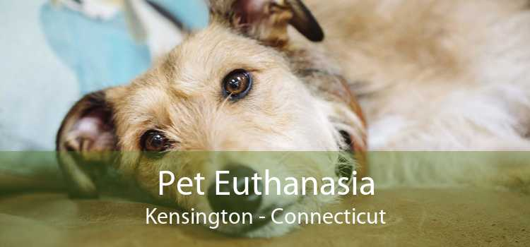 Pet Euthanasia Kensington - Connecticut