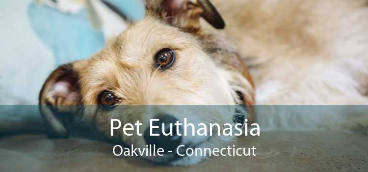 Pet Euthanasia Oakville - Connecticut