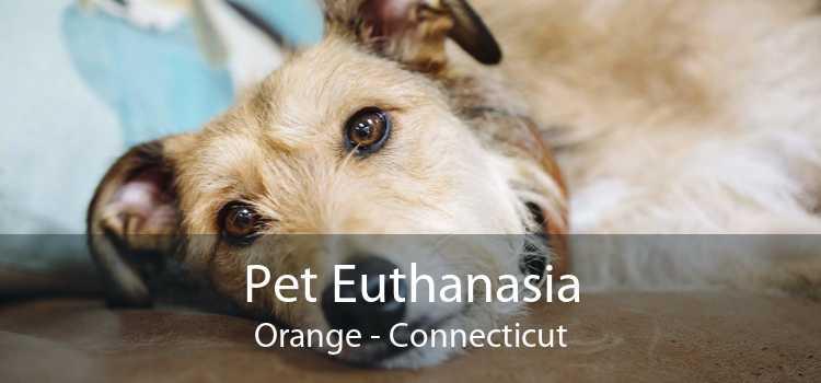 Pet Euthanasia Orange - Connecticut