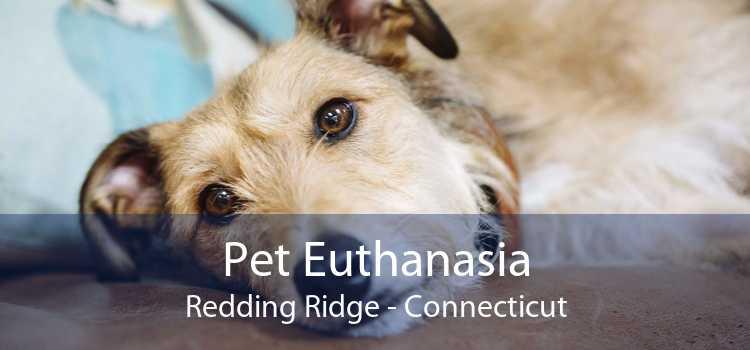 Pet Euthanasia Redding Ridge - Connecticut