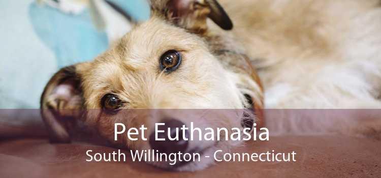Pet Euthanasia South Willington - Connecticut