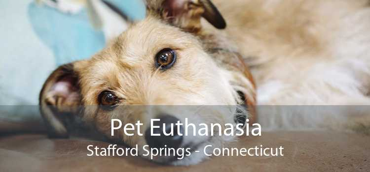 Pet Euthanasia Stafford Springs - Connecticut