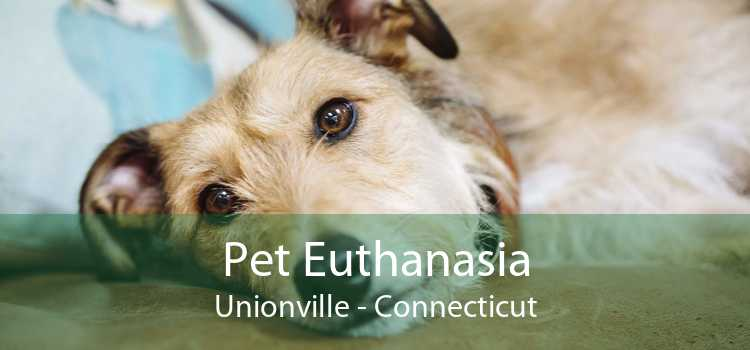 Pet Euthanasia Unionville - Connecticut