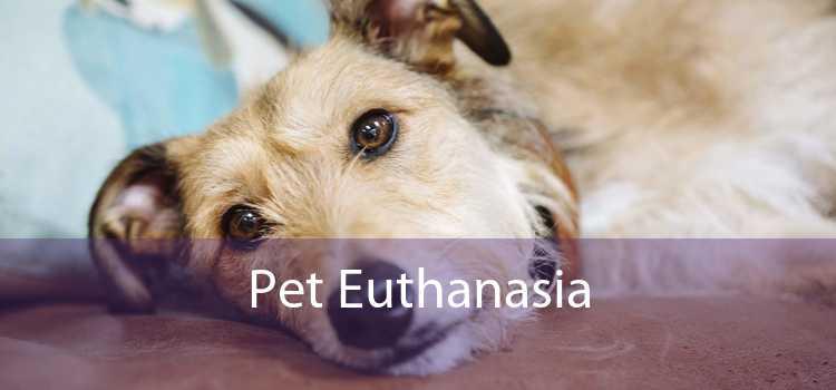 Pet Euthanasia