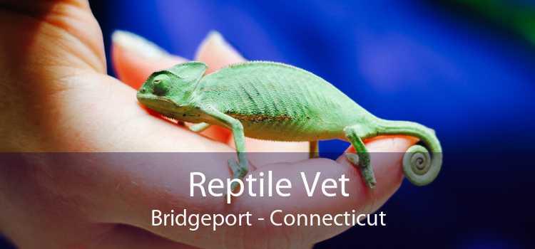 Reptile Vet Bridgeport - Connecticut
