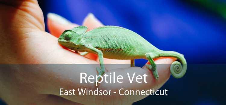 Reptile Vet East Windsor - Connecticut
