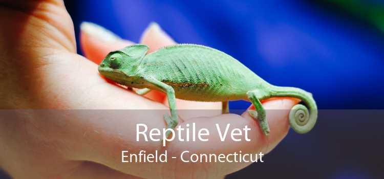 Reptile Vet Enfield - Connecticut