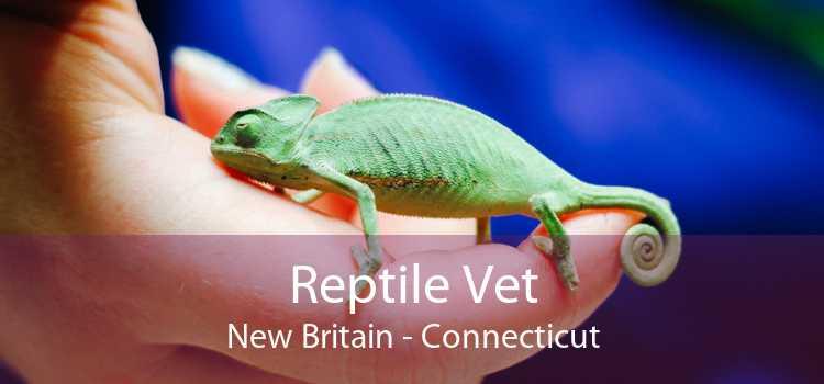 Reptile Vet New Britain - Connecticut