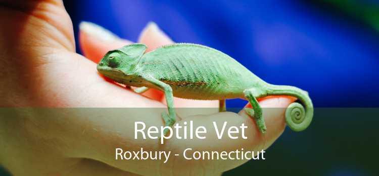 Reptile Vet Roxbury - Connecticut