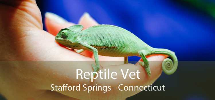 Reptile Vet Stafford Springs - Connecticut