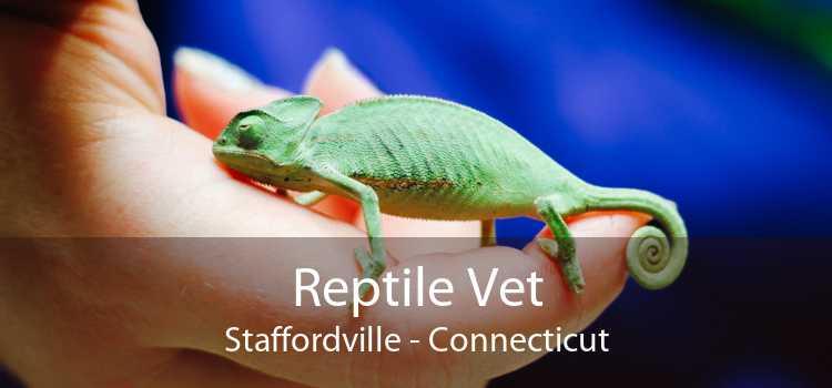 Reptile Vet Staffordville - Connecticut