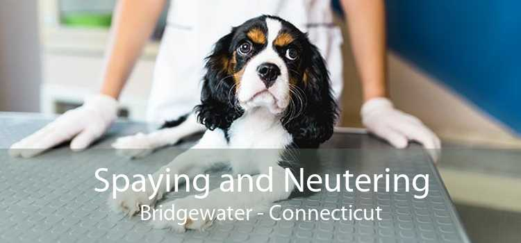 Spaying and Neutering Bridgewater - Connecticut