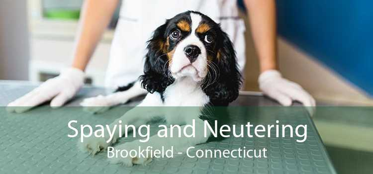 Spaying and Neutering Brookfield - Connecticut