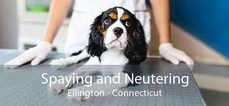 Spaying and Neutering Ellington - Connecticut