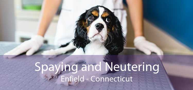 Spaying and Neutering Enfield - Connecticut