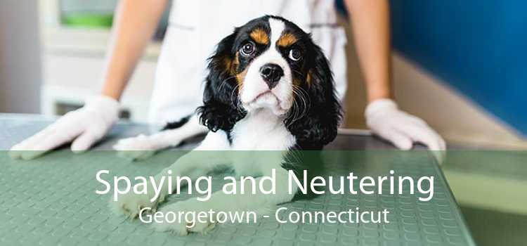 Spaying and Neutering Georgetown - Connecticut
