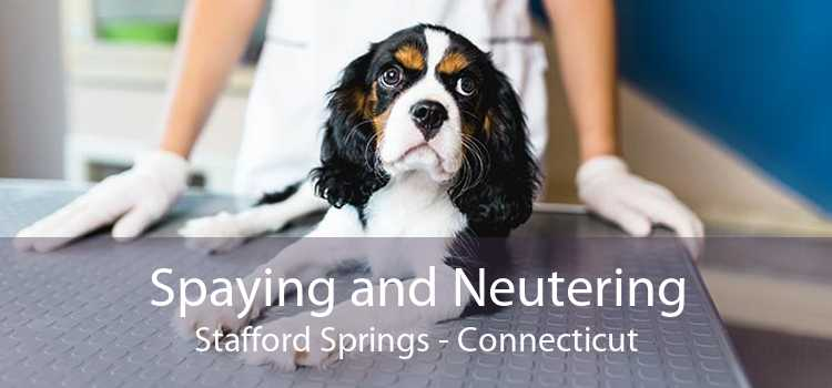 Spaying and Neutering Stafford Springs - Connecticut