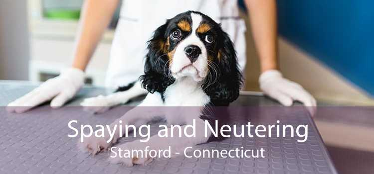 Spaying and Neutering Stamford - Connecticut
