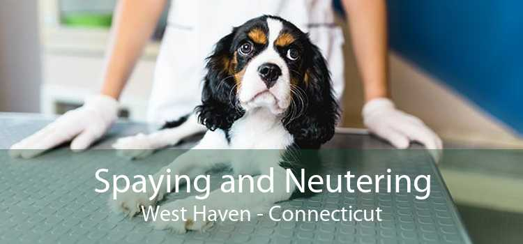 Spaying and Neutering West Haven - Connecticut