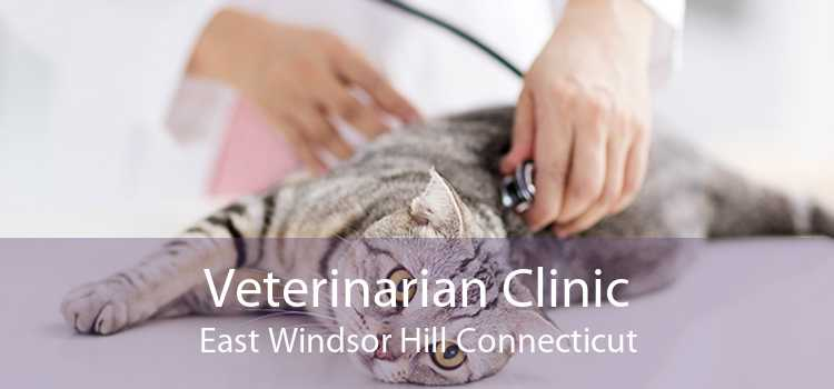 Veterinarian Clinic East Windsor Hill Connecticut