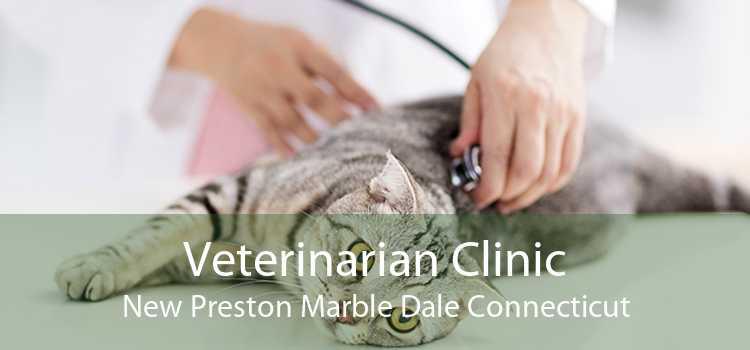Veterinarian Clinic New Preston Marble Dale Connecticut